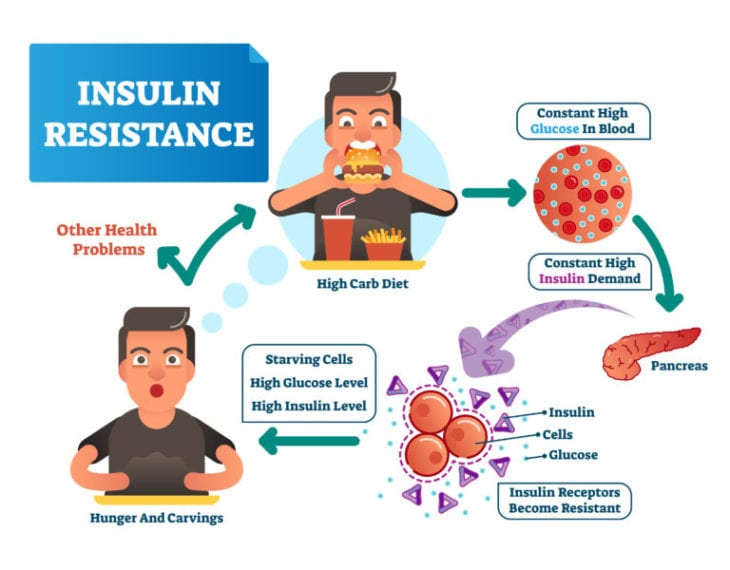 Insulin Resistance 101 & 2 Things You can do to Avoid It